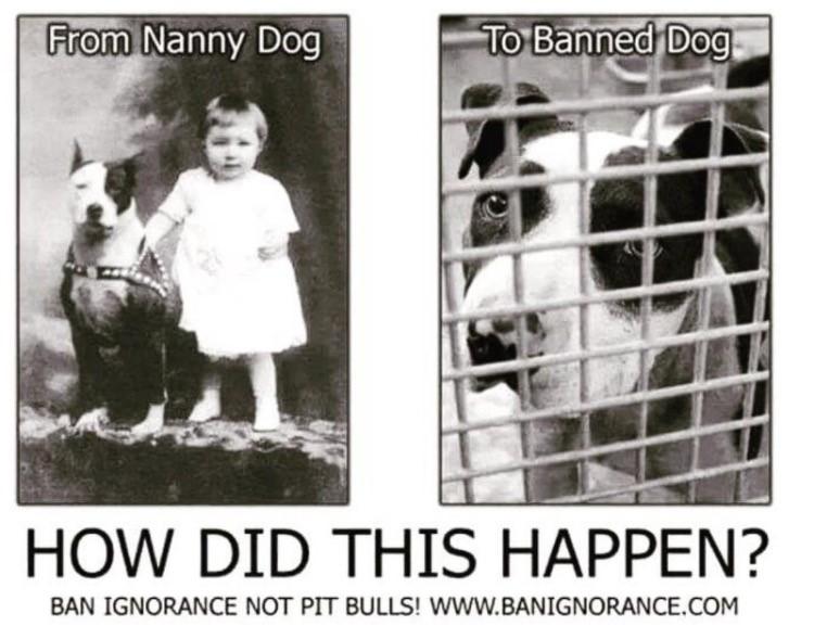 www.banignorance.com
