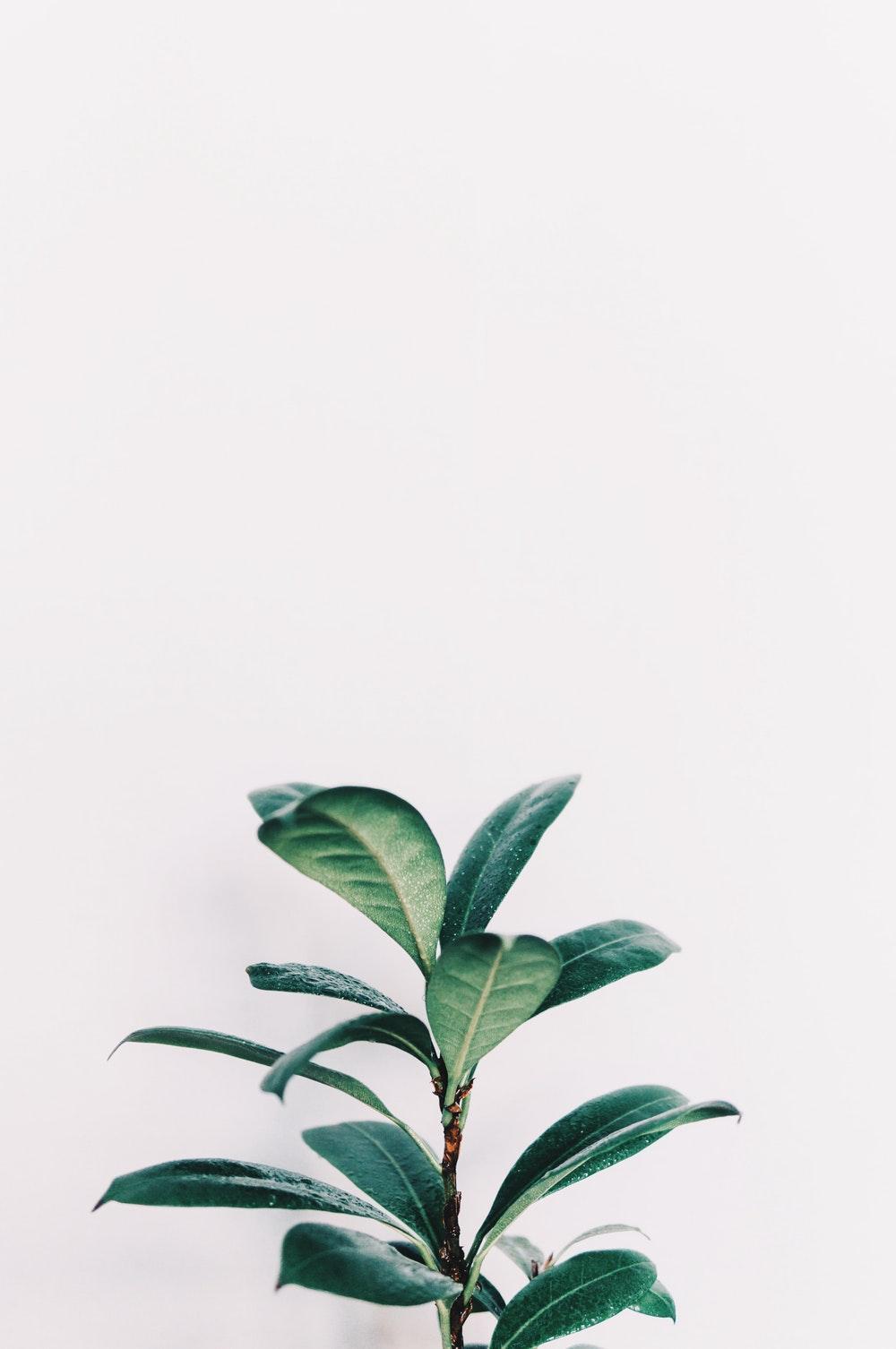 leafy | 66 best free leafy, leafe, plant, and leaf photos on Unsplash