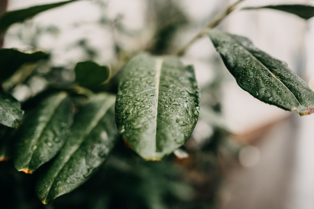 leafy   66 best free leafy, leafe, plant, and leaf photos on Unsplash