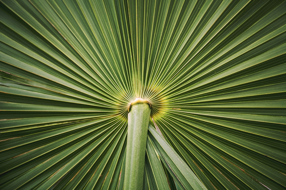 Plant life | 100+ best free life, plant, flower, and green photos on Unsplash