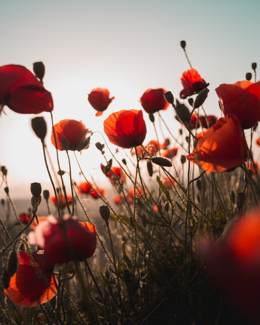 Plant life   100+ best free life, plant, flower, and green photos on Unsplash