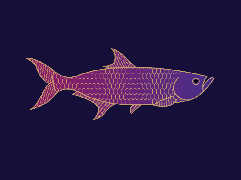 fish_dribbb