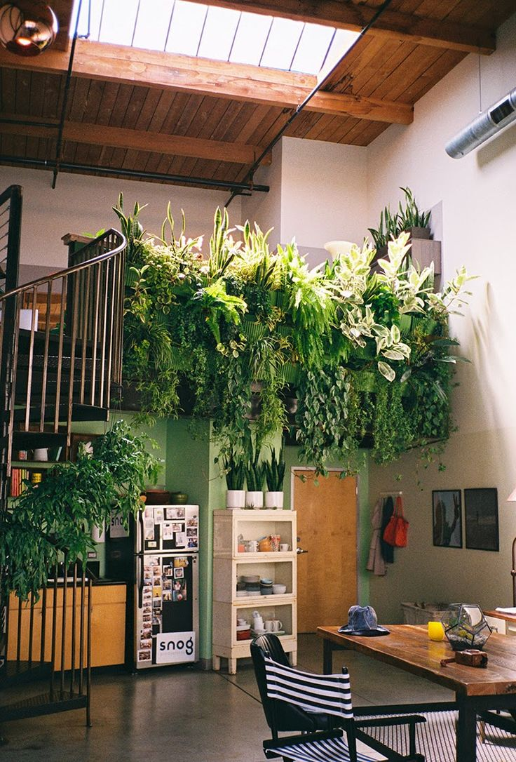 Now that is a houseplant: