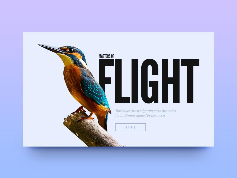 Masters of Flight by Vedad Siljak - Dribbble